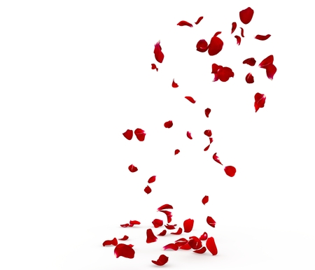 Rose petals fall beautifully on the floor. Isolated white background