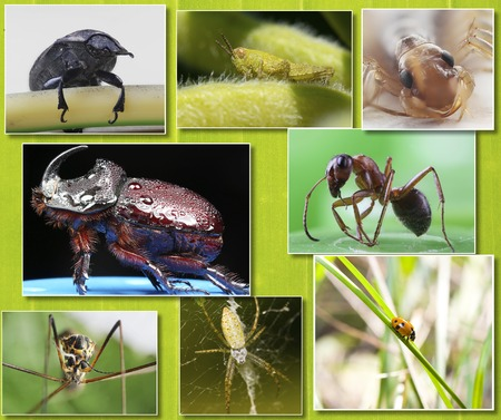 Collage of macro photos of insects on the background of tropical green leaf
