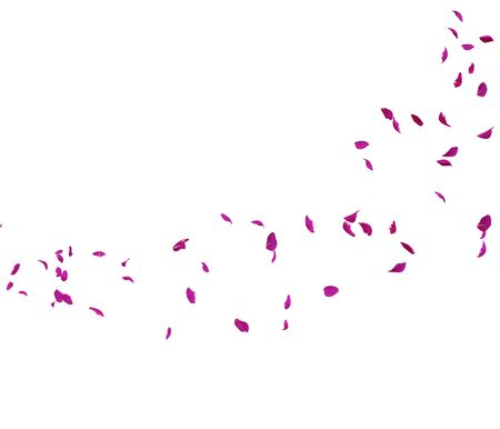 Violet rose petals fly in a circle. The center free space for Your photos or text. Isolated white background