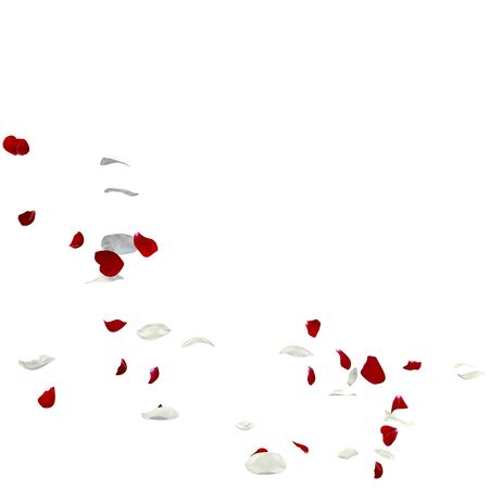 Red and white rose petals fall to the floor. Isolated white background Stockfoto - 128534353
