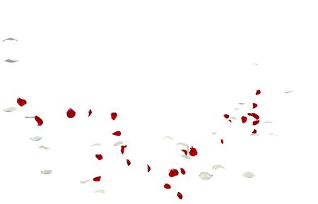 Red and white rose petals fall to the floor. Isolated white background Stockfoto - 128534432