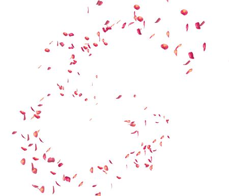 Red rose petals fly in the air. Isolated white background Stockfoto - 128534437