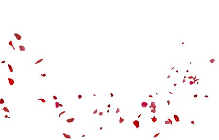Rose petals flying on white isolated background