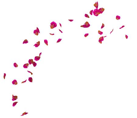 Red rose petals fly in a circle. The center free space for Your photos or text. Isolated white background Stockfoto - 128534448