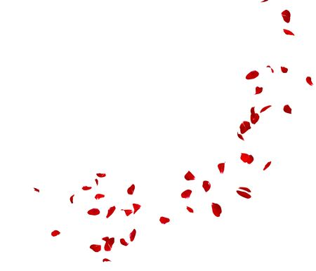 Red rose petals fly in a circle. The center free space for Your photos or text. Isolated white background Stockfoto - 128534491