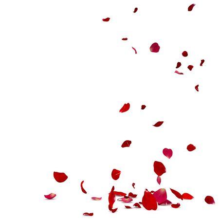 Los pétalos de rosa caen maravillosamente al suelo. Fondo blanco aislado Foto de archivo