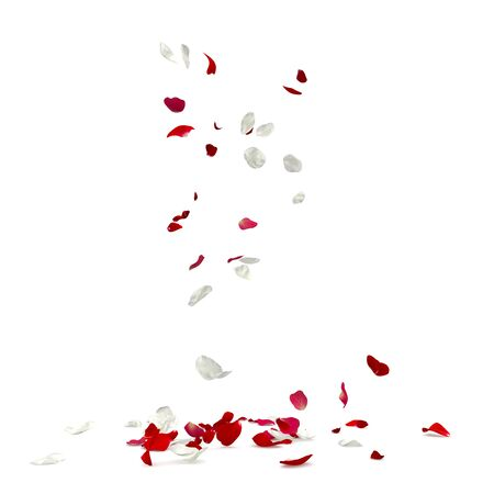 Red and white rose petals fall to the floor. Isolated white background