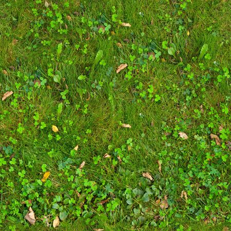 Autumn seamless texture of green grass with yellow leaves Banque d'images