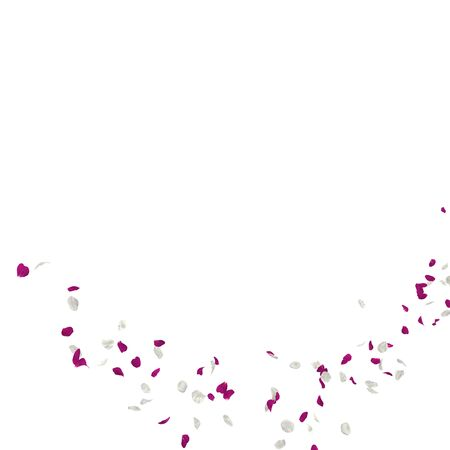 Purple and white rose petals fly in the air. Isolated white background. 3D illustration