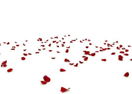 Des pétales de rose sont éparpillés sur le sol. Fond blanc isolé