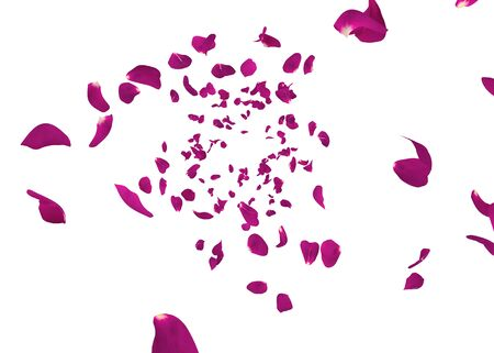 Purple rose petals swirl in the air. White isolated background