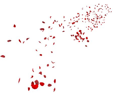 Red rose petals fly in the air. White isolated background