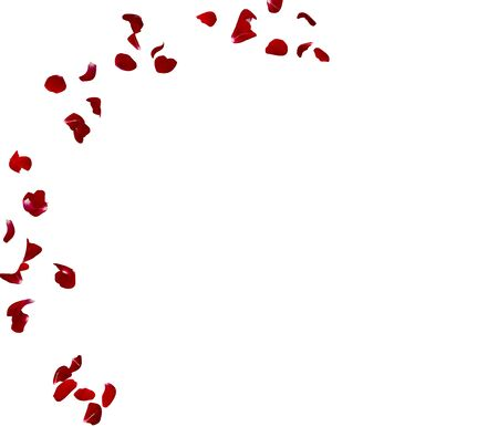 Red rose petals fly in the air on a white isolated background