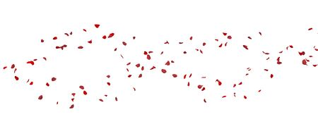 Red rose petals fly away. White isolated background