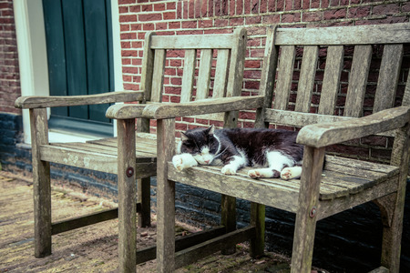spotted cat sleeps on an old chair near the House photo