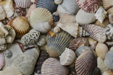 Background composition with collection of shells from various beaches