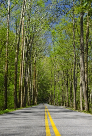 Road in the forest on a sunny day Stock Photo