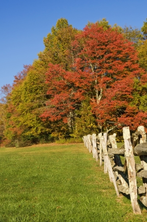 Rural scene with red maple and other trees in autumn colors