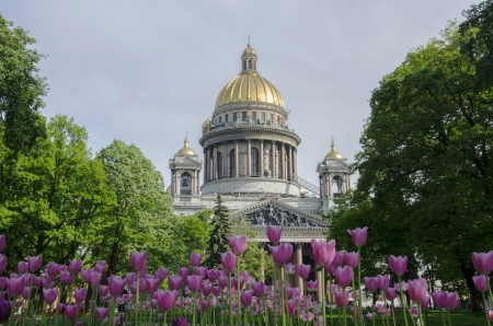 St. Isaacs Cathedral, St. Petersburg, Russia with tulips blooming in front