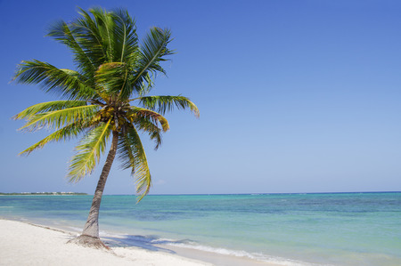 Palm tree leaning over a sandy beach Stock Photo