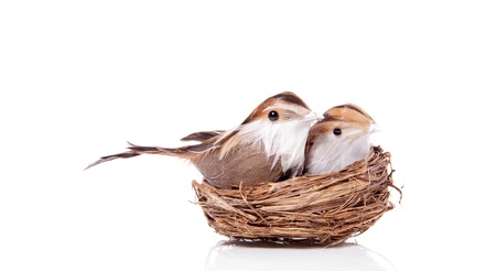 two little birds brood in their birdsnest isolated over white