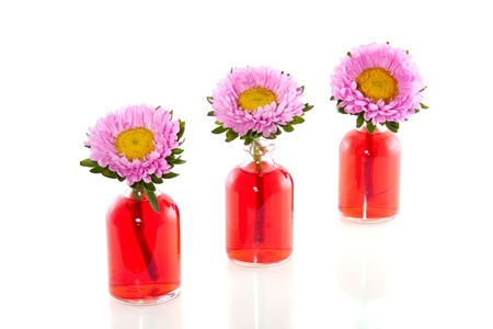 pink daisies in glass vases photo