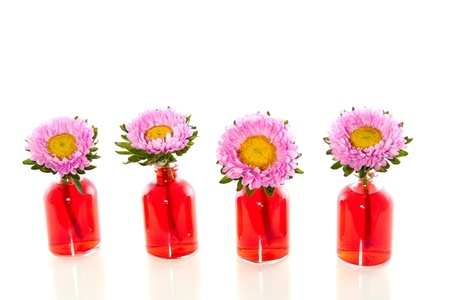 Pink daisies in glass vases isolated white background photo
