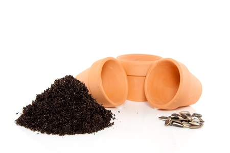 ready to plant the sunflowerseeds in a terracotta flower pot isolated over white Stock Photo