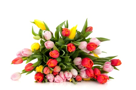mixed colorful bouquet of Dutch tulips isolated over white background