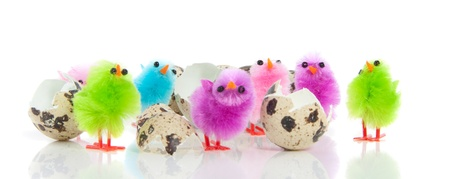 seven colorful chicks  crept out of their eggshells isolated over white
