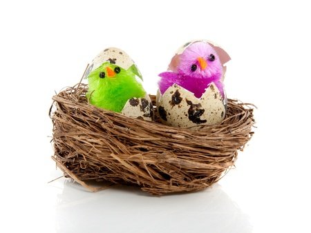 breaking out: two colorful chicks in a birds nest breaking out of their egg shells Stock Photo