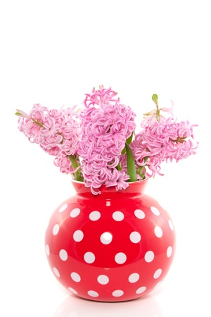 a bouquet of pink hyacinths in a red white dotted vase isolated over white Stock Photo