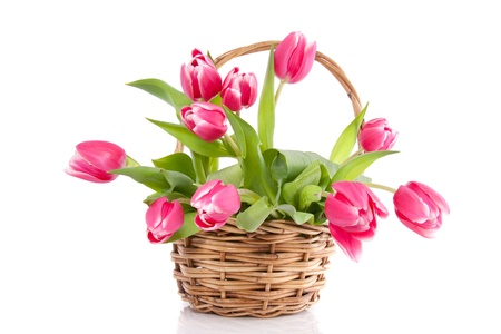 a bouquet of pink tulips in a brown wicker basket isolated over white