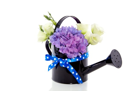 hydrangea purple bouquet in black vase isolated on white background