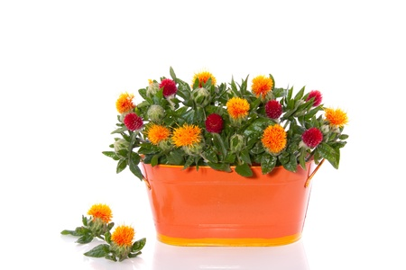 orange red flower bouquet in an iron vase isolated on white background