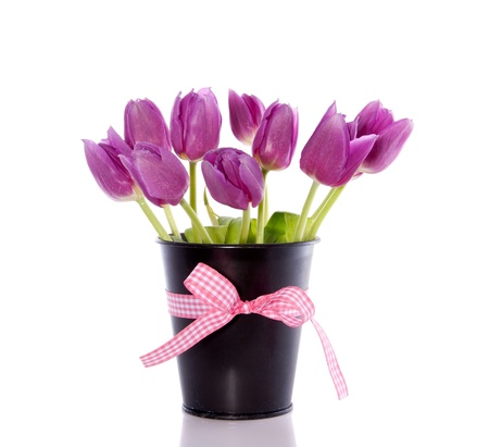 purple tulips in an iron black bucket isolated over white photo