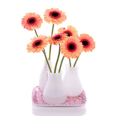 orange pink gerber flowers in white little vases isolated over white background