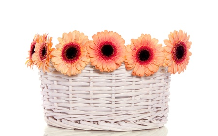 orange pink gerber flowers in a white wicker basket