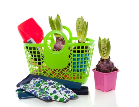 gardening with colorful hyacinths in a plastic shopping bag isolated over white Stock Photo