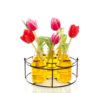 pink and red tulips in little glass vases with yellow liquid in an iron black rack isolated over white Stock Photo