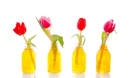 pink and red tulips in little glass vases with yellow liquid isolated on white background Stock Photo
