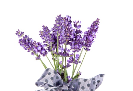 purple lavender with a grey dotted ribbon isolated on white background