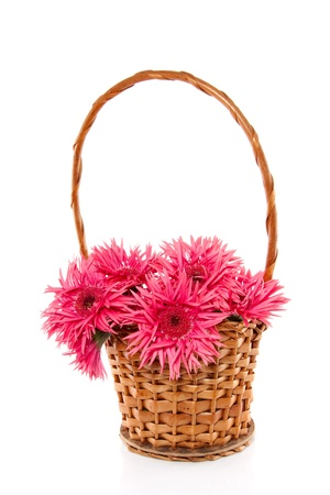 a bouquet of pink Gerber in a wicker basket isolated over white