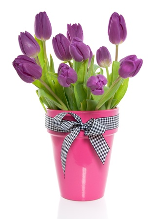 a bunch of purple tulips in a pink vase with a checkered ribbon Stock Photo