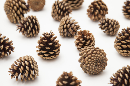 pine cone arrangement on a white background.