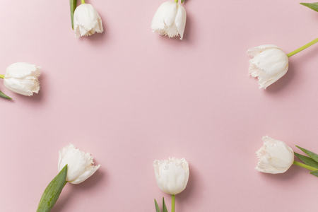 White tulip flowers on a pastel pink background