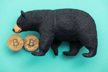 Bitcoin cryptocurrency coin with a grizzly bear. Bearish bitcoin trading