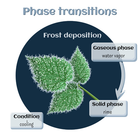 matter: Frost deposition - soft rime on raspberry leaves. Phase transition from gaseous to solid state.