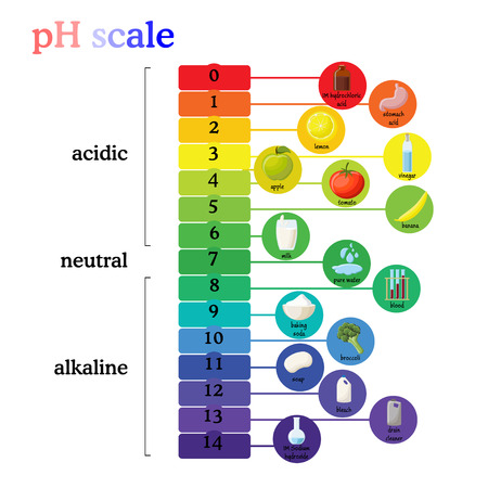 pH scale diagram with corresponding acidic or alkaline values for common substances, food, household chemicals . Litmus paper color chart. Colorful flat vector illustration on white background. Иллюстрация