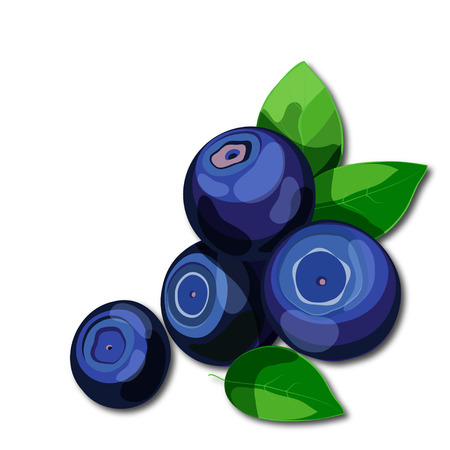 Fresh juicy blueberries with green leaves isolated on white background. Healthy vitamins rich food. Cartoon style vector illustration. Иллюстрация